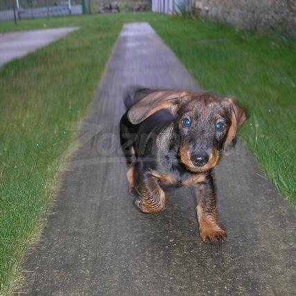 Najkrajší pes najkrajšie šteňa najlepšie oblečený pes
