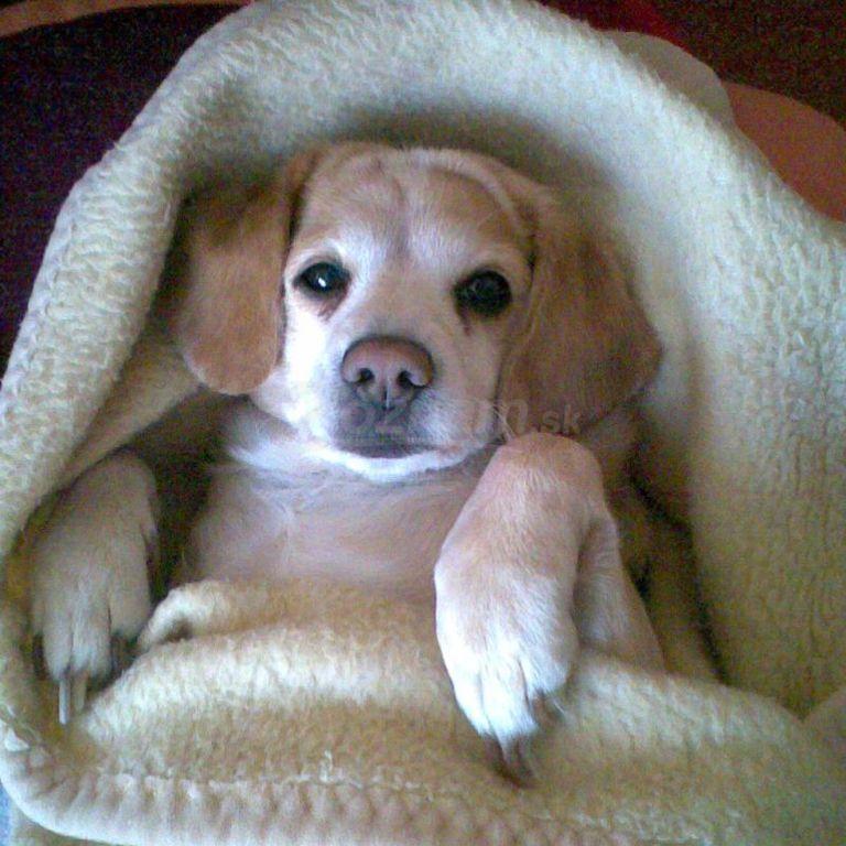 Najkrajší pes Najkrajšie šteňa Najlepšie oblečený pes ...